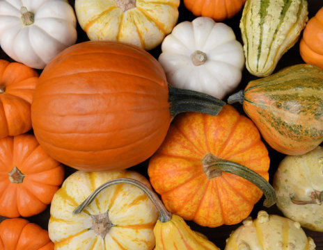 Fall… the season of PUMPKIN!